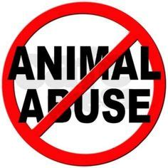 Its cruel to keep animals in cages essay
