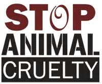 Should Animals Be Kept in Cages? - Sample Essays
